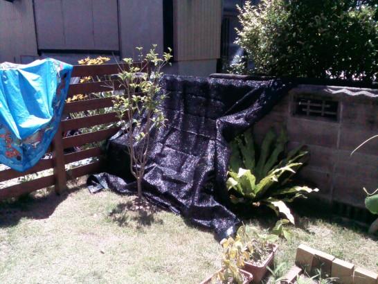 カラスよけのネットを庭池に掛ける