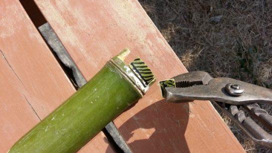 ペンチで竹を折り取ったところ
