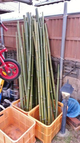 取ってきた後の竹