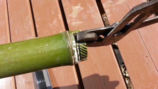 ペンチで竹を折り取る