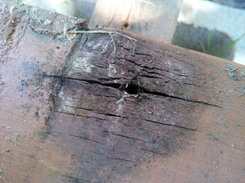 ウッドデッキ天板裏側の腐り具合